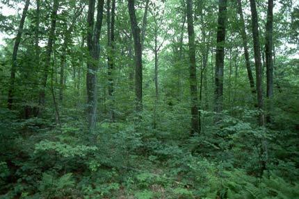bosco da beccaccia