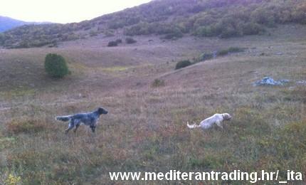 mediteran trading caccia quaglie croazia