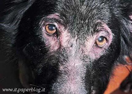 allergia alimenatare cane cacciatori bellunesi