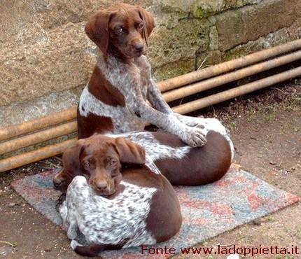 cuccioli caccia