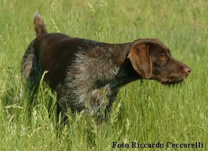 Prove lavoro cane caccia