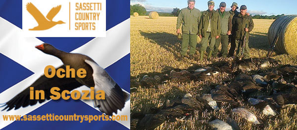 sassetti caccia scozia