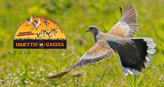 macedonia caccia alle tortore obiettivo caccia