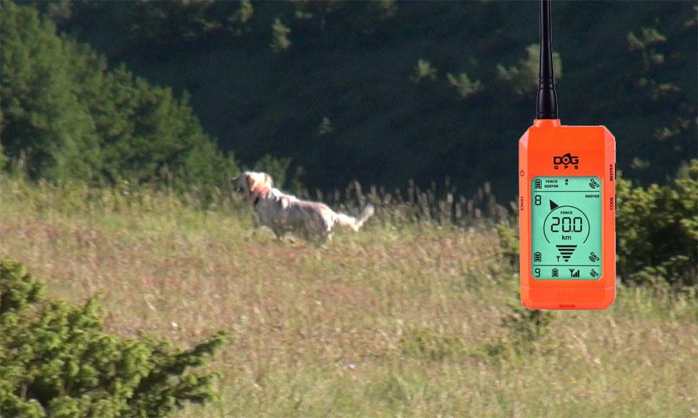 allenamento cane valle di fiordimonte riserva di caccia