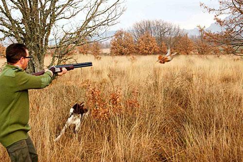 caccia piemonte calendario venatorio corte