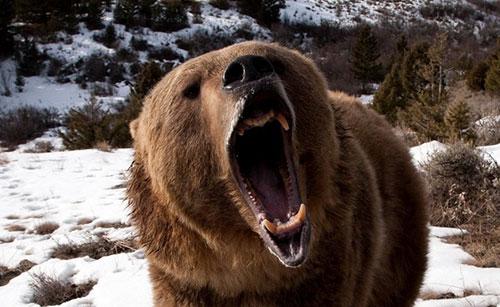 svizzera abbattimento grandi carnivori caccia