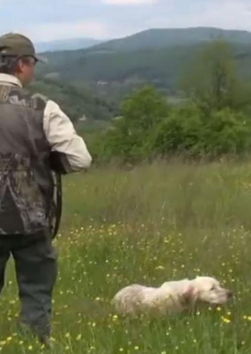 baciano caccia cane da ferma fagiano pernice starna