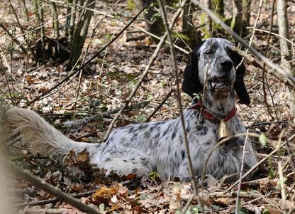 beccaccia monitoraggio cane da ferma enci brevetto