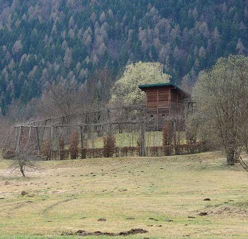 roccoli lombardia riapertura caccia cacciatori