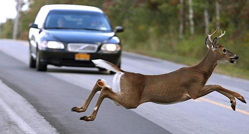 brambilla caccia abolizione movimento animalista referendum