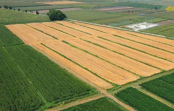 uccelli francia diminuzione pratiche agricole