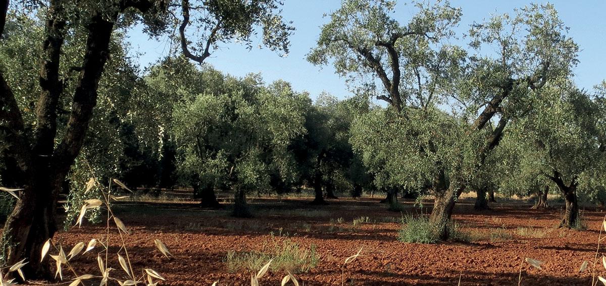 Calendario Venatorio Puglia Ultime Notizie.Puglia 20 Giornate Di Mobilita Venatoria Caccia In Fiera