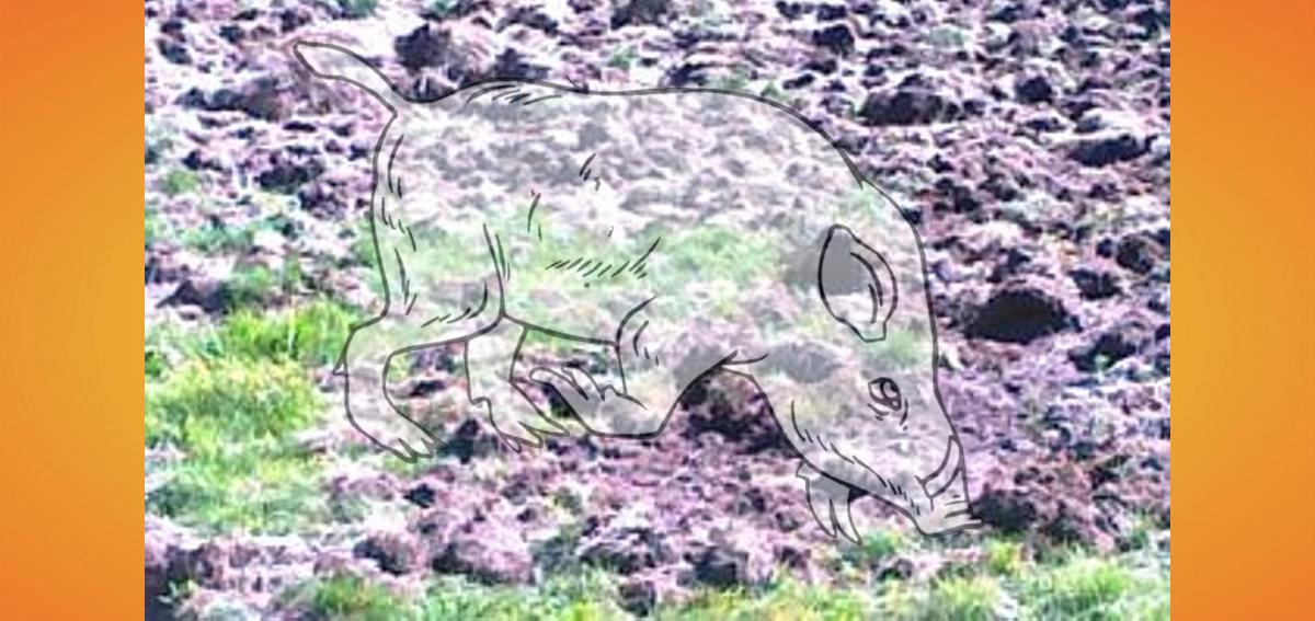 caccia inquinamento da cinghiale