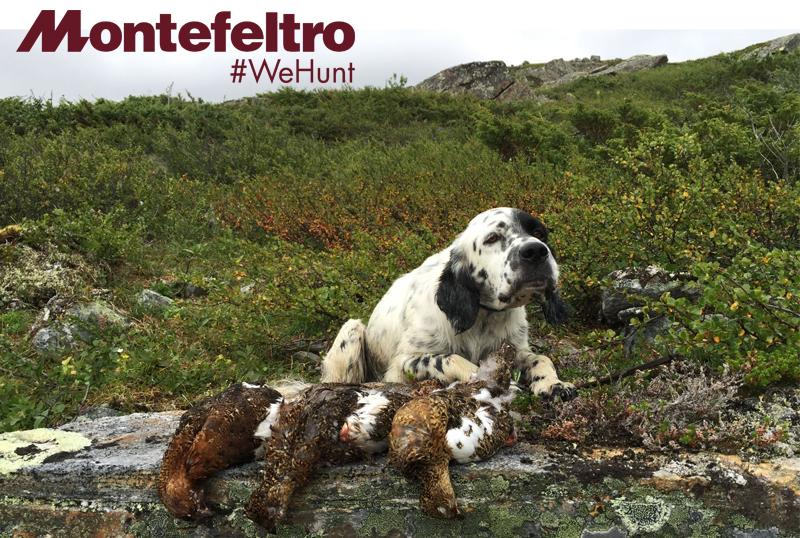 montefeltro le più importantio esperienze di caccia turismo venatorio world