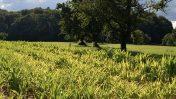 FACE ACCOGLIE CON FAVORE LA FARM TO FORK DELL'UNIONE EUROPEA