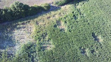 SODDISFAZIONE PER L'APPROVAZIONE IN COMMISSIONE AGRICOLTURA DI UNA RISOLUZIONE SUI DANNI DA FAUNA SELVATICA